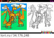 Cartoon Illustration of Giraffes Animal Characters Group Coloring Book Worksheet. Стоковое фото, фотограф Zoonar.com/Igor Zakowski / easy Fotostock / Фотобанк Лори