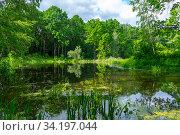Купить «Forest landscape of a lake. Forest around the lake on a summer, sunny day», фото № 34197044, снято 13 июня 2020 г. (c) Григорий Стоякин / Фотобанк Лори