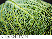 savoy cabbage on a dark background close-up. Стоковое фото, фотограф Tetiana Chugunova / Фотобанк Лори