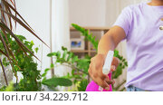 hand spraying houseplant with water at home. Стоковое видео, видеограф Syda Productions / Фотобанк Лори