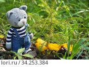 Игрушки. Кот собирает грибы лисички. Стоковое фото, фотограф Dmitry29 / Фотобанк Лори