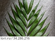 green moist palm tree leaf. Стоковое фото, фотограф Syda Productions / Фотобанк Лори