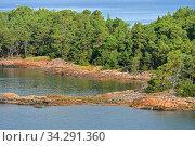 Coniferous forest on rocky island of Helsinki Archipelago in sunny day, Finland (2014 год). Стоковое фото, фотограф Валерия Попова / Фотобанк Лори