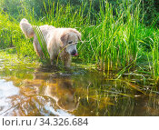 Golden retriever dog outdoors on a sunny day. Стоковое фото, фотограф Zoonar.com/Galyna Andrushko / easy Fotostock / Фотобанк Лори