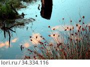 Moor bei Großensterz bei Mitterteich im Landkreis Tirschenreuth (Bayern) Стоковое фото, фотограф Zoonar.com/Walter J.Pilsak / easy Fotostock / Фотобанк Лори