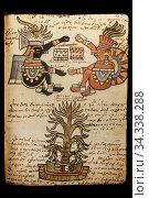 Cacao tree. Codex Tudela, 16th-century pictorial Aztec codex. Museum... Стоковое фото, фотограф Juan García Aunión / age Fotostock / Фотобанк Лори
