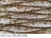 Querstrukturierte Rinde einer Palme als Detailaufnahme und Hintergrund. Стоковое фото, фотограф Zoonar.com/Alfred Hofer / easy Fotostock / Фотобанк Лори