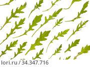 Green vegetable natural arugula pattern on a white background. Стоковое фото, фотограф Ярослав Данильченко / Фотобанк Лори