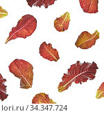 Colorful leaves pattern of healthy natural organic salad flying against white background. Стоковое фото, фотограф Ярослав Данильченко / Фотобанк Лори