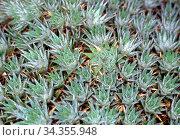 Aloe Feld Arzneipflanze aus der Wüste. Стоковое фото, фотограф Zoonar.com/Dr. Norbert Lange / easy Fotostock / Фотобанк Лори