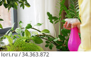 asian woman spraying houseplant with water at home. Стоковое видео, видеограф Syda Productions / Фотобанк Лори