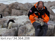 Adelie penguin (Pygoscelis adeliae) observing scientist measuring Antarctic Skua chick (Stercorarius antarcticus) at Dumont d'Urville Station, Antarctica, January. 2013. Стоковое фото, фотограф Fred Olivier / Nature Picture Library / Фотобанк Лори