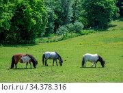 Three horses grazing on a green meadow on a farmland in Kent, England. Стоковое фото, фотограф Zoonar.com/Pawel Opaska / easy Fotostock / Фотобанк Лори