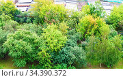 Top view of green trees in city garden in rainy day (The Cherry Orchard... Стоковое фото, фотограф Zoonar.com/Valery Voennyy / easy Fotostock / Фотобанк Лори