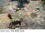 Überlebenskampf einer Pflanze auf einem Fußboden aus Beton. Стоковое фото, фотограф Zoonar.com/Heiko Kueverling / easy Fotostock / Фотобанк Лори