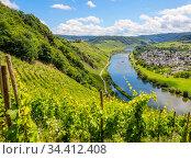 Marienburg over vineyards at the Mosel, Puenderich, Rhineland-Palatinate, Germany . Редакционное фото, агентство Caro Photoagency / Фотобанк Лори