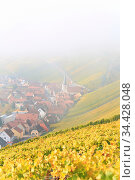 Nebel im Weinberg. Стоковое фото, фотограф Zoonar.com/fotoping / easy Fotostock / Фотобанк Лори