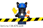 Worker dog with helmet behind warning tape ,work in progress, and... Стоковое фото, фотограф Zoonar.com/Javier Brosch / age Fotostock / Фотобанк Лори