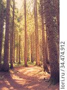 Trees in a forest. Retro faded style. Стоковое фото, фотограф Zoonar.com/Ruslan Gilmanshin / age Fotostock / Фотобанк Лори
