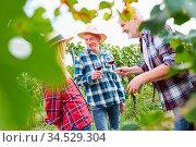 Winzer machen Smalltalk bei einer Weinverkostung mit Rotwein im Weinberg. Стоковое фото, фотограф Zoonar.com/Robert Kneschke / age Fotostock / Фотобанк Лори