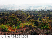 Foggy landscape of the valley, where the volcano was. big island. ... Стоковое фото, фотограф Zoonar.com/Dmitry Kushch / age Fotostock / Фотобанк Лори