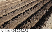 Closeup of plowed soil with furrows. Spring agricultural work, preparation for seeding. Стоковое видео, видеограф Яков Филимонов / Фотобанк Лори