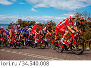GEELONG, AUSTRALIA - FEBRUARY 2, 2020: Cofidis team during the 2020... Стоковое фото, фотограф Zoonar.com/Chris Putnam / age Fotostock / Фотобанк Лори