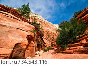 Beautiful slopes of Zion canyon. Utah. USA. Стоковое фото, фотограф Zoonar.com/Dmitry Kushch / age Fotostock / Фотобанк Лори