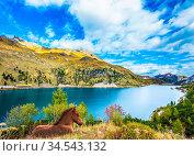 Mountain Lake Lago di Fedaia, Dolomites. Sleek horse calmly rest in... Стоковое фото, фотограф Zoonar.com/kavram / easy Fotostock / Фотобанк Лори