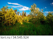 Green field under blue sky. Nature background. Стоковое фото, фотограф Zoonar.com/Dmitry Kushch / age Fotostock / Фотобанк Лори