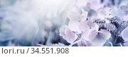 Von der Sonne beschienene Hortensien in Pastellfarbigkeit. Offene... Стоковое фото, фотограф Zoonar.com/wolfgang rieger / easy Fotostock / Фотобанк Лори