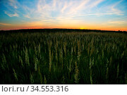 Coloful sunset in summer field. Стоковое фото, фотограф Zoonar.com/Dmitry Kushch / age Fotostock / Фотобанк Лори