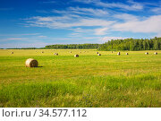 Round bales of hay on a  field after the harvest. Стоковое фото, фотограф Дмитрий Кутлаев / Фотобанк Лори