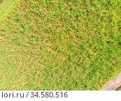 Sugarcane fields near the town of Murwillumbah and Wollumbin National... Стоковое фото, фотограф Zoonar.com/Chris Putnam / easy Fotostock / Фотобанк Лори