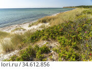Am Strand von Ristinge, Insel Langeland, Dänemark, Europa   Ristinge... Стоковое фото, фотограф Peter Schickert / age Fotostock / Фотобанк Лори