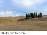 Landscape of autumn field with cypresses in Tuscany, Italy (2012 год). Стоковое фото, фотограф Знаменский Олег / Фотобанк Лори