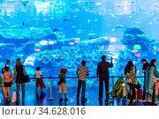 DUBAI, UAE - NOVEMBER 14: Aquarium in Dubai Mall - world's largest... Стоковое фото, фотограф Zoonar.com/Figurniy Sergey / age Fotostock / Фотобанк Лори