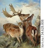 Ansdell Richard - Fallow Deer - British School - 19th Century. Стоковое фото, фотограф Artepics / age Fotostock / Фотобанк Лори