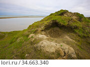 Den of a brown bear (Ursus arctos beringianus) on a hill above the Amguema River estuary, Chukotka, Siberia, Russia. When curled up in this bed, a bear... Стоковое фото, фотограф Jenny E. Ross / Nature Picture Library / Фотобанк Лори