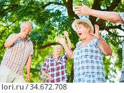 Aktive Gruppe Senioren beim Boccia spielen im Sommer im Garten vom... Стоковое фото, фотограф Zoonar.com/Robert Kneschke / age Fotostock / Фотобанк Лори