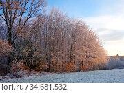 Wald, frost, eis, eisig, kalt, kälte, winter, winterwetter, wintersonne... Стоковое фото, фотограф Zoonar.com/Zoonar/Elke Hötzel / easy Fotostock / Фотобанк Лори