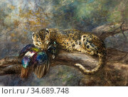 Swan Cuthbert Edmund - a Himalayan Leopard with Its Prey a Monaul... Стоковое фото, фотограф Artepics / age Fotostock / Фотобанк Лори