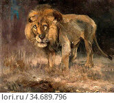 Swan Cuthbert Edmund - the Old Lion - British School - 19th Century. Стоковое фото, фотограф Artepics / age Fotostock / Фотобанк Лори