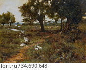 Waite Edward Wilkins - Cattle and Geese in a River Landscape - British... Стоковое фото, фотограф Artepics / age Fotostock / Фотобанк Лори