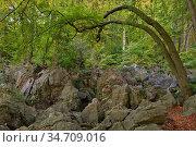 Felsenmeer, famous Nature Reserve, sea of rocks, rock chaos of Hemer... Стоковое фото, фотограф Ralf Kistowski / age Fotostock / Фотобанк Лори