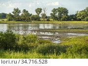 Wildgänse an der Elbe bei Buch, Ortsteil von Tangermünde, Sachsen... Стоковое фото, фотограф Peter Schickert / age Fotostock / Фотобанк Лори