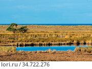 Herbststimmung mit Sonnenschein im Naturschutzgebiet an der Ostsee... Стоковое фото, фотограф Zoonar.com/Christine Nöh / easy Fotostock / Фотобанк Лори