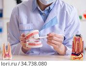Woman dentist practicing work on tooth model. Стоковое фото, фотограф Elnur / Фотобанк Лори