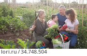Positive family of four with gathered greens and vegetables talking in backyard garden about rich harvest. Стоковое видео, видеограф Яков Филимонов / Фотобанк Лори