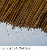 Schilf im Winter mit Eis. Стоковое фото, фотограф Zoonar.com/Ewald Fr / easy Fotostock / Фотобанк Лори